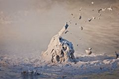 Borrelende modderpot in geothermisch park in Nieuwe Zeland royalty-vrije stock afbeelding