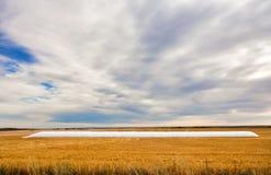 Borsa bianca del grano nel campo raccolto dorato Fotografia Stock Libera da Diritti