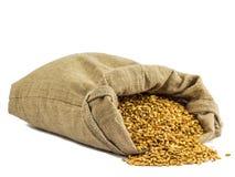 Borsa del grano Immagini Stock