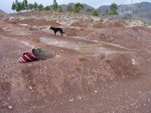 Borsa del legno del fuoco con un cane Fotografia Stock Libera da Diritti