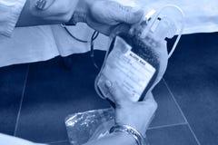 Borsa del sangue nelle mani degli infermieri Fotografia Stock