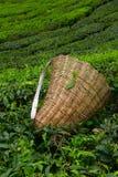 Borsa della raccoglitrice del tè Immagine Stock Libera da Diritti