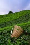 Borsa della raccoglitrice del tè Immagini Stock