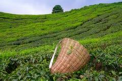 Borsa della raccoglitrice del tè Fotografie Stock Libere da Diritti