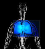 Borst MRI royalty-vrije illustratie