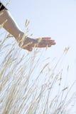 borstahanden förföljer överkantvete Fotografering för Bildbyråer