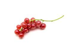 Borste av den nya röda vinbäret på vit bakgrund Arkivfoto