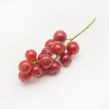 Borste av den nya röda vinbäret på vit bakgrund Royaltyfri Fotografi