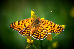 Borstel-betaalde vlinder royalty-vrije stock foto