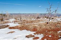 Borstel en sneeuw bij Grote Canion Royalty-vrije Stock Afbeelding