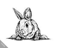 Borstel het schilderen de inkt trekt geïsoleerde konijnillustratie Royalty-vrije Stock Foto's