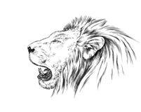 Borstel het schilderen de inkt trekt geïsoleerde leeuwillustratie Royalty-vrije Stock Afbeeldingen
