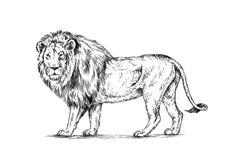 Borstel het schilderen de inkt trekt geïsoleerde leeuwillustratie Royalty-vrije Stock Afbeelding