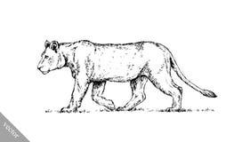Borstel het schilderen de inkt trekt geïsoleerde leeuwillustratie Royalty-vrije Stock Foto