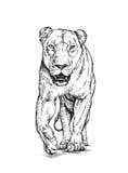 Borstel het schilderen de inkt trekt geïsoleerde leeuwillustratie Stock Afbeelding