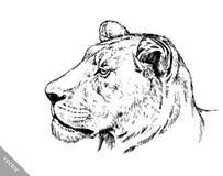 Borstel het schilderen de inkt trekt geïsoleerde leeuwillustratie Stock Afbeeldingen
