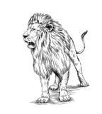 Borstel het schilderen de inkt trekt geïsoleerde leeuwillustratie Royalty-vrije Stock Foto's