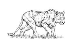 Borstel het schilderen de inkt trekt geïsoleerde leeuwillustratie Stock Foto