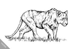 Borstel het schilderen de inkt trekt geïsoleerde leeuwillustratie Stock Foto's