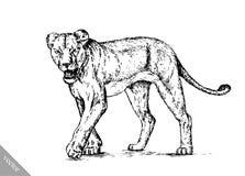 Borstel het schilderen de inkt trekt geïsoleerde leeuwillustratie Royalty-vrije Stock Fotografie