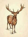 Borstel het schilderen de inkt trekt hertenillustratie Stock Foto's