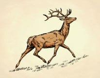 Borstel het schilderen de inkt trekt hertenillustratie Royalty-vrije Stock Afbeelding