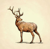 Borstel het schilderen de inkt trekt hertenillustratie Stock Afbeelding