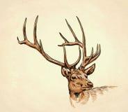Borstel het schilderen de inkt trekt hertenillustratie Royalty-vrije Stock Afbeeldingen