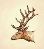 Borstel het schilderen de inkt trekt hertenillustratie Royalty-vrije Stock Foto's