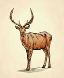 Borstel het schilderen de inkt trekt hertenillustratie Royalty-vrije Stock Foto