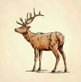 Borstel het schilderen de inkt trekt hertenillustratie Royalty-vrije Stock Fotografie