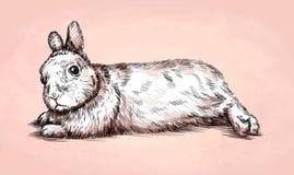 Borstel het schilderen de inkt trekt konijnillustratie Stock Foto's