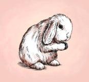 Borstel het schilderen de inkt trekt konijnillustratie Stock Afbeeldingen
