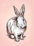 Borstel het schilderen de inkt trekt konijnillustratie Royalty-vrije Stock Foto