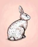 Borstel het schilderen de inkt trekt konijnillustratie Royalty-vrije Stock Fotografie