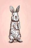 Borstel het schilderen de inkt trekt konijnillustratie Stock Foto