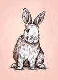 Borstel het schilderen de inkt trekt konijnillustratie Royalty-vrije Stock Afbeeldingen