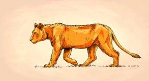Borstel het schilderen de inkt trekt leeuwillustratie Royalty-vrije Stock Afbeelding