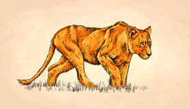Borstel het schilderen de inkt trekt leeuwillustratie Royalty-vrije Stock Foto