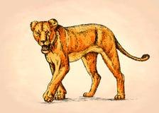 Borstel het schilderen de inkt trekt leeuwillustratie Royalty-vrije Stock Fotografie