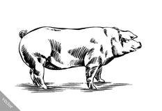 Borstel het schilderen de inkt trekt varkensillustratie Royalty-vrije Stock Foto