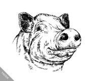 Borstel het schilderen de inkt trekt varkensillustratie Stock Fotografie