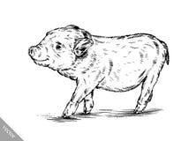 Borstel het schilderen de inkt trekt varkensillustratie Royalty-vrije Stock Foto's