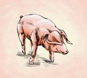 Borstel het schilderen de inkt trekt varkensillustratie Stock Afbeelding