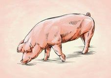 Borstel het schilderen de inkt trekt varkensillustratie Royalty-vrije Stock Afbeelding