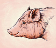 Borstel het schilderen de inkt trekt varkensillustratie Royalty-vrije Stock Afbeeldingen