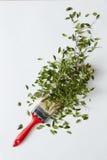 Borstel met groene bladeren Stock Afbeelding