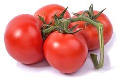 Borstel met vier tomaten stock afbeeldingen