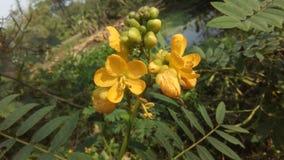 Borstel Mooie bloemen Stock Foto's
