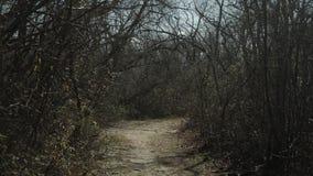 Borstels en bomen met een weg Royalty-vrije Stock Foto's